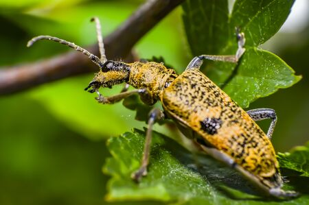 mustard color bug on green leaf in season forest