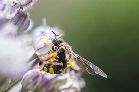 little blossom bee in my season garden
