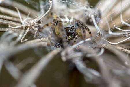 spider in its own web nest on a seasonal plant Stockfoto