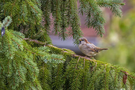 a little young bird on the branch in nature