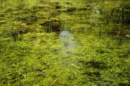 Swamp area Stock Photo - 503584