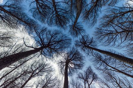 Bäume gesehen von unten