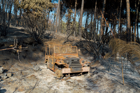Car carcass burned in the pine forest