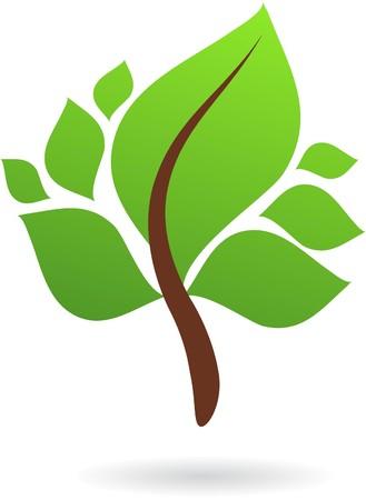 logo recyclage: Une branche avec des feuilles vertes - nature ic�ne conception