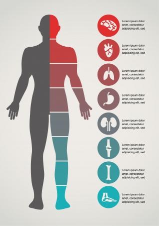 fisiologia: Médica e de saúde fundo Ilustração