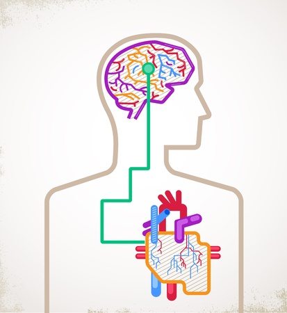 body blood: Brain and heart connected - vector illustration infographic