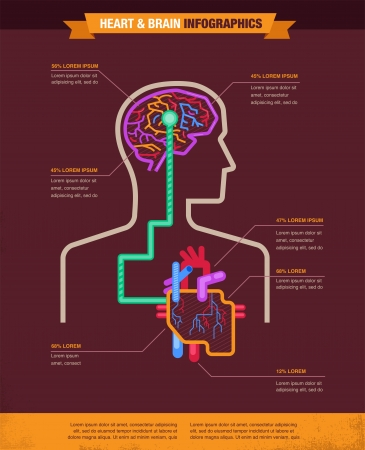 Brain and heart connected - vector illustration infographic illustration