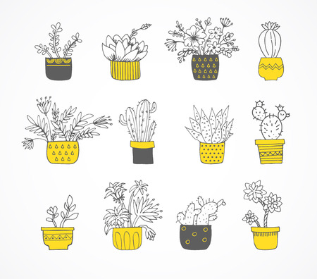 sub tropical: Cute hand drawn cactus and succulent set