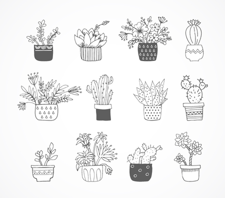 Cute hand drawn sketch, doodle cactus and succulent set