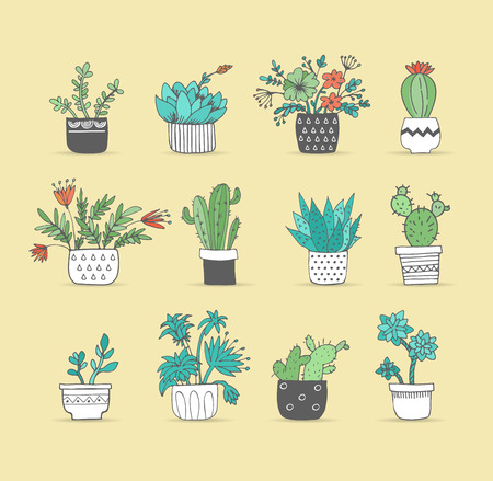 succulent: Cute hand drawn cactus and succulent set