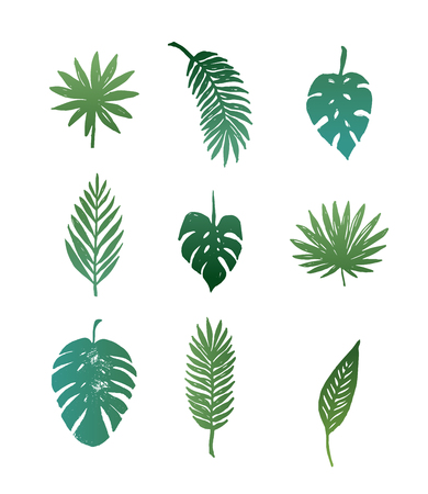 Summer, Tropical Paradise, beach, vector, hand drawn collection of palm leaves