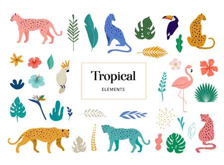 Tropical exotic animals and birds - leopards, tigers, parrots and toucans vector illustration. Wild animals in the jungle, rainforest Çizim