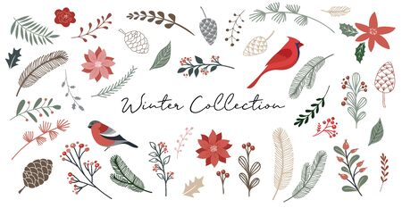 Botanical Christmas, Xmas elements, winter flowers, leaves, birds and pinecones isolated on white backgrounds. Hand drawn vector illustration