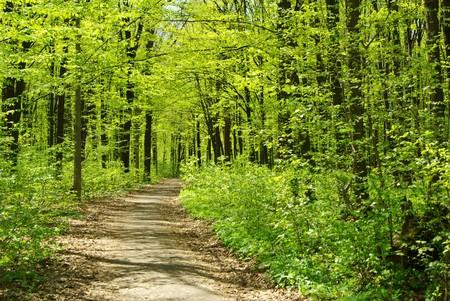 朝は森林の美しい風景 写真素材