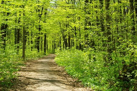 Schönen Waldlandschaft am Morgen Standard-Bild - 8009945