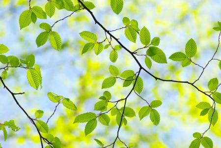 Grüne Blätter auf die grünen Hintergründen Standard-Bild - 8009991