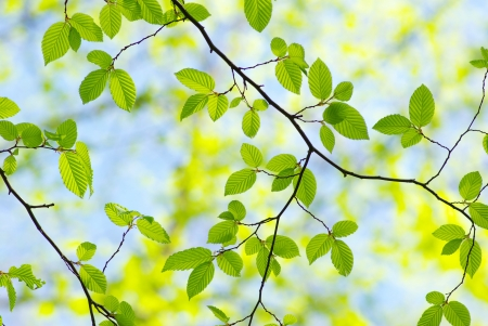 green leaves on the green backgrounds Stock Photo - 8009991