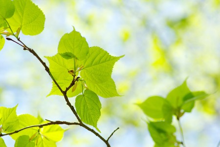 Green leaves over abstract background