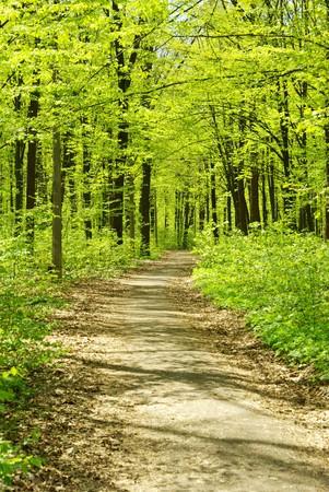 uplifting: paisaje hermoso bosque en la ma�ana