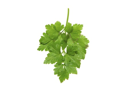 fresh herbs parsley isolated on white photo