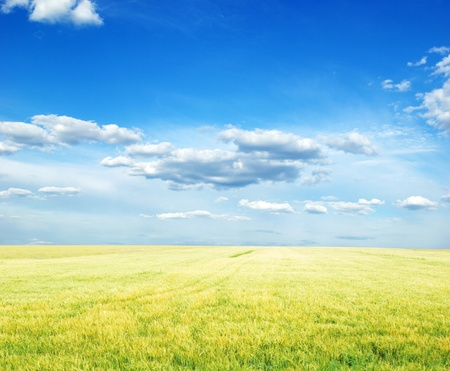 Fields of wheat at the end of summer fully ripe Stock Photo - 10435845