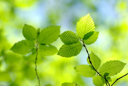 maintained: green leaves over green background Stock Photo