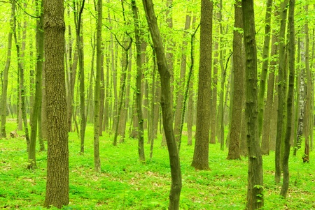 beautiful forest landscape in the morning