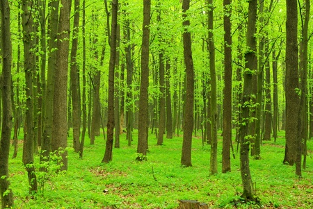 beautiful forest landscape in the morning photo