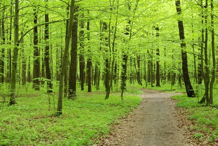 uplifting: beautiful forest landscape in the morning