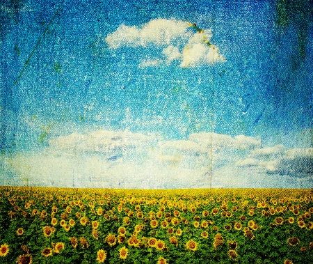 field under sky in grunge  photo