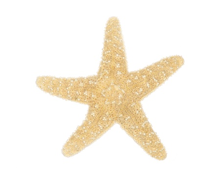 Sea star isolated over white background photo