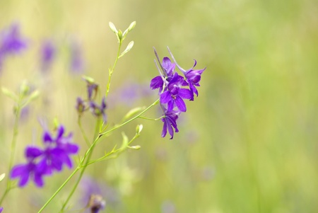 spring violet flowers on field photo