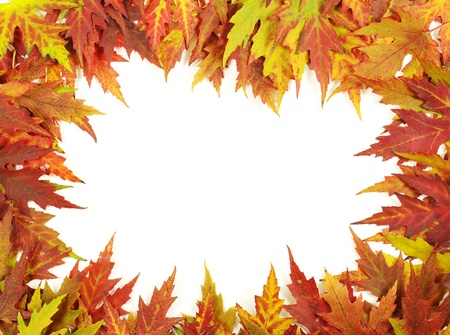 autumn maple leaves on white photo