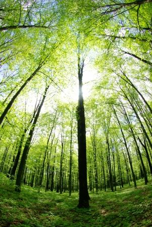 朝の森林景観 写真素材