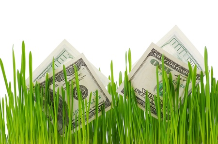 dollar bills growing in the green grass photo
