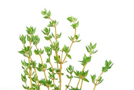 thyme on white isolated background photo