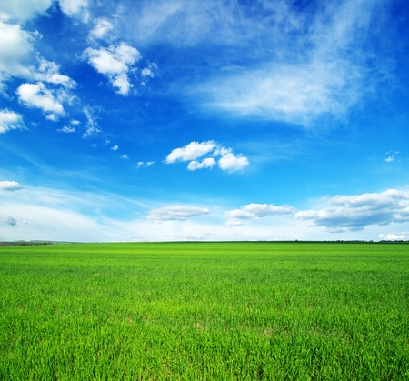 Fields of wheat at the end of summer fully ripe Stock Photo - 13906904