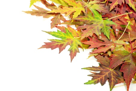 Colorful autumn leaves isolated on white photo