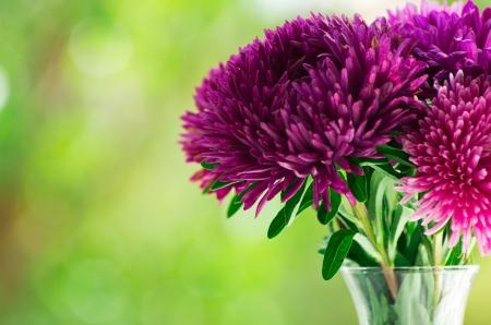 flores moradas: ramo de flores sobre fondo verde