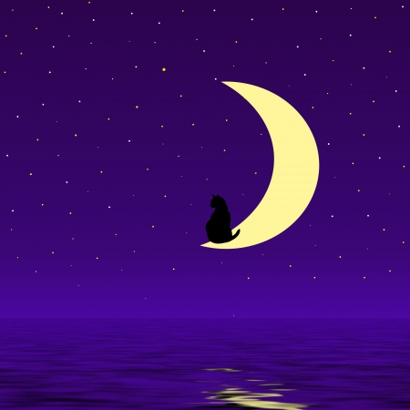 cat in the moon night photo
