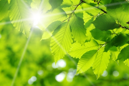 green leaves on the green backgrounds Stok Fotoğraf - 22321984