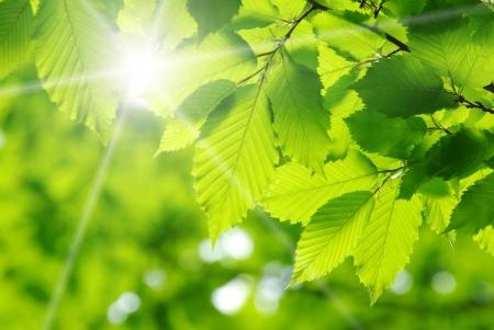 groene bladeren op de groene achtergrond Stockfoto