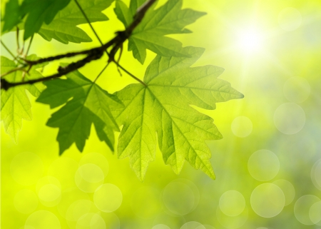 green leaf: green leaves on the green backgrounds