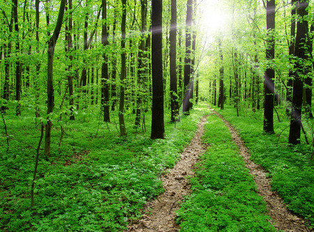 beautiful forest landscape in the morning Stock Photo - 26214086