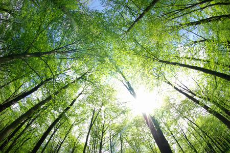 숲에서 푸른 나무 배경
