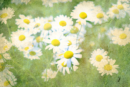 camomile: retro flowers camomile blossoms on meadow