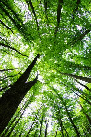 uplifting: beautiful forest landscape view from bottom