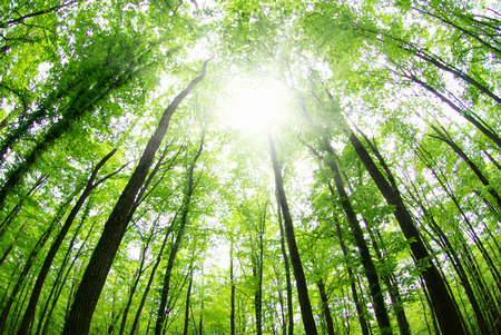 朝は美しい森の風景