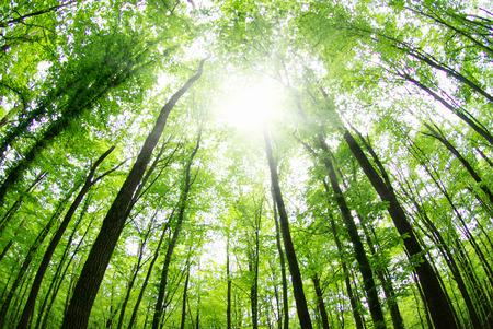 paysage magnifique forêt le matin