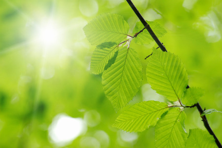 nature backgrounds: green leaves over green background Stock Photo